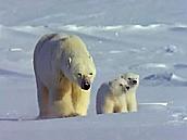 Watch Full Movie - משפחת החיות שלי - היפופוטם