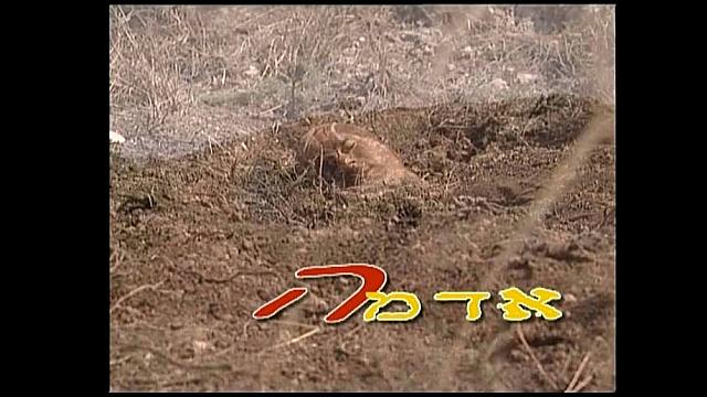 Watch Full Movie - אדמה - לצפיה בטריילר